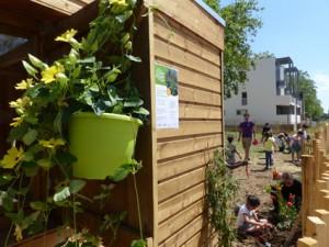 Atelier jardin ALAE Dahlias (21)
