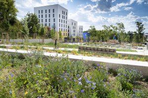 Photo du jardin des belvédères Lyon la Duchère en juillet 2020